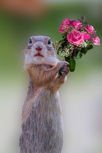 Squirell-roses-1278642_640-200x300