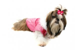 dog-1-1184414-639x426-300x200